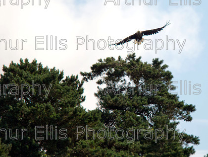 Eagles Lough Derg 11 