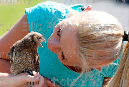 Regatta 18 