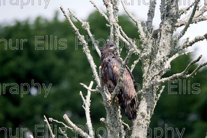 Eagles Lough Derg 10 