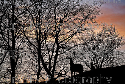 Horse-and-Foal-1 