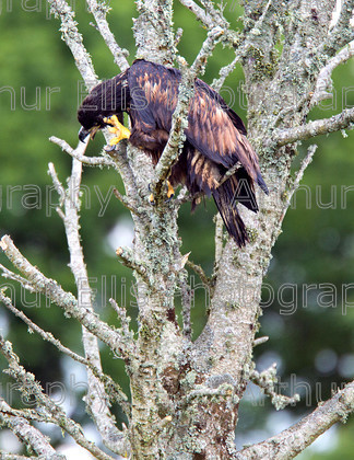 Eagles Lough Derg 7 